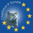 Chartreux d'Europe